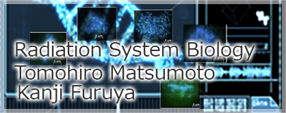matsumoto_banner